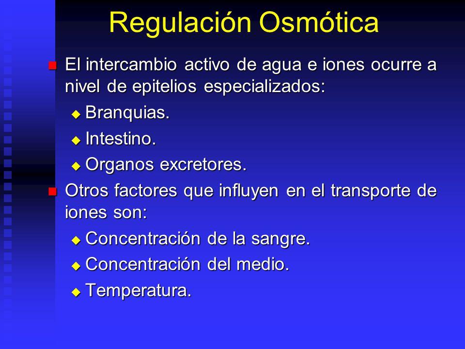 Regulación Osmótica El intercambio activo de agua e iones ocurre a nivel de epitelios especializados: