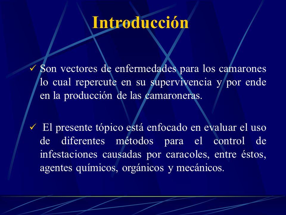 Introducción Son vectores de enfermedades para los camarones lo cual repercute en su supervivencia y por ende en la producción de las camaroneras.