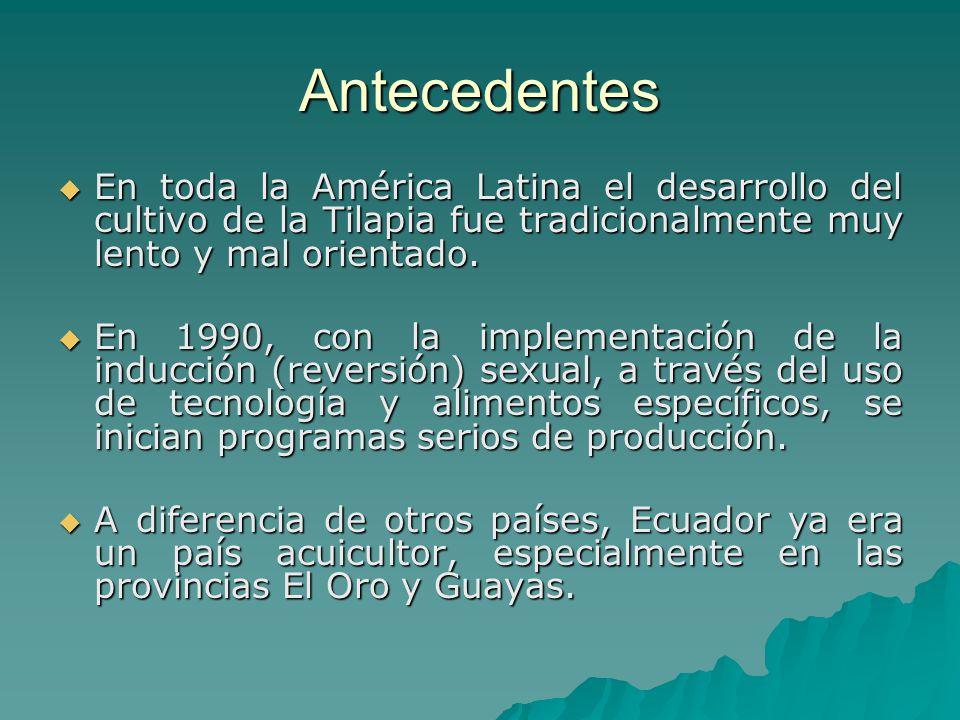 Antecedentes En toda la América Latina el desarrollo del cultivo de la Tilapia fue tradicionalmente muy lento y mal orientado.