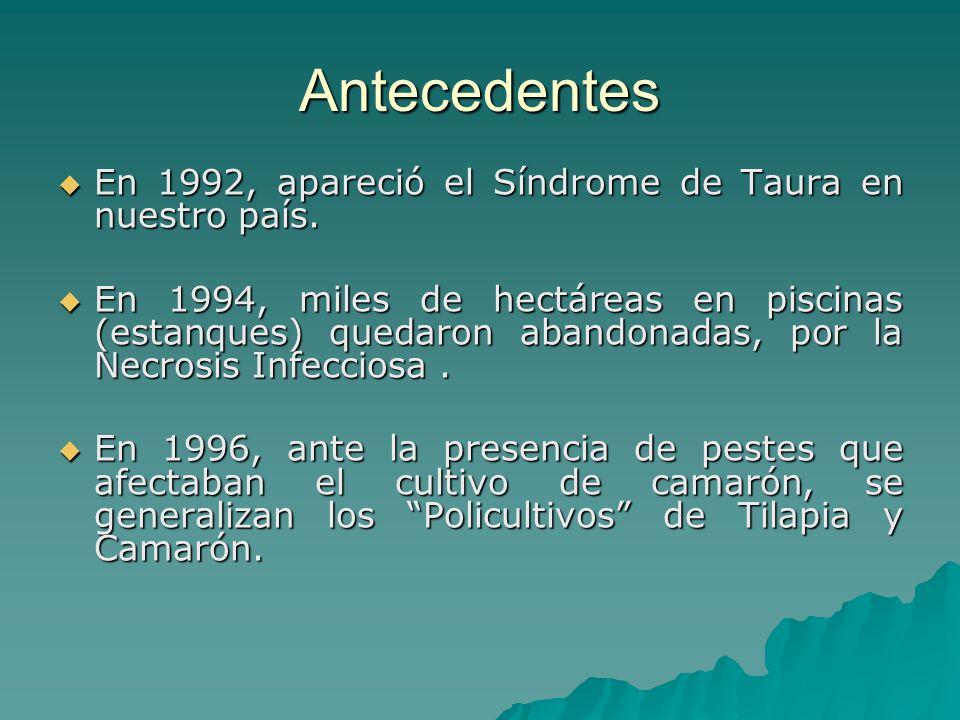 Antecedentes En 1992, apareció el Síndrome de Taura en nuestro país.