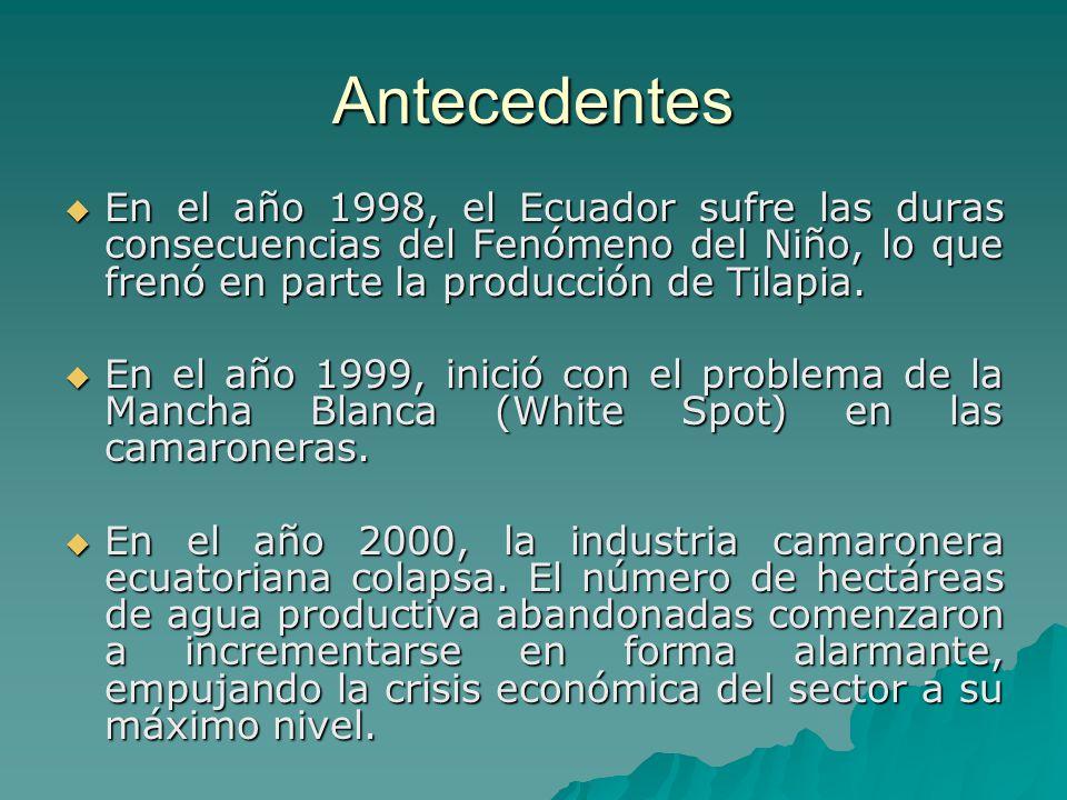 Antecedentes En el año 1998, el Ecuador sufre las duras consecuencias del Fenómeno del Niño, lo que frenó en parte la producción de Tilapia.