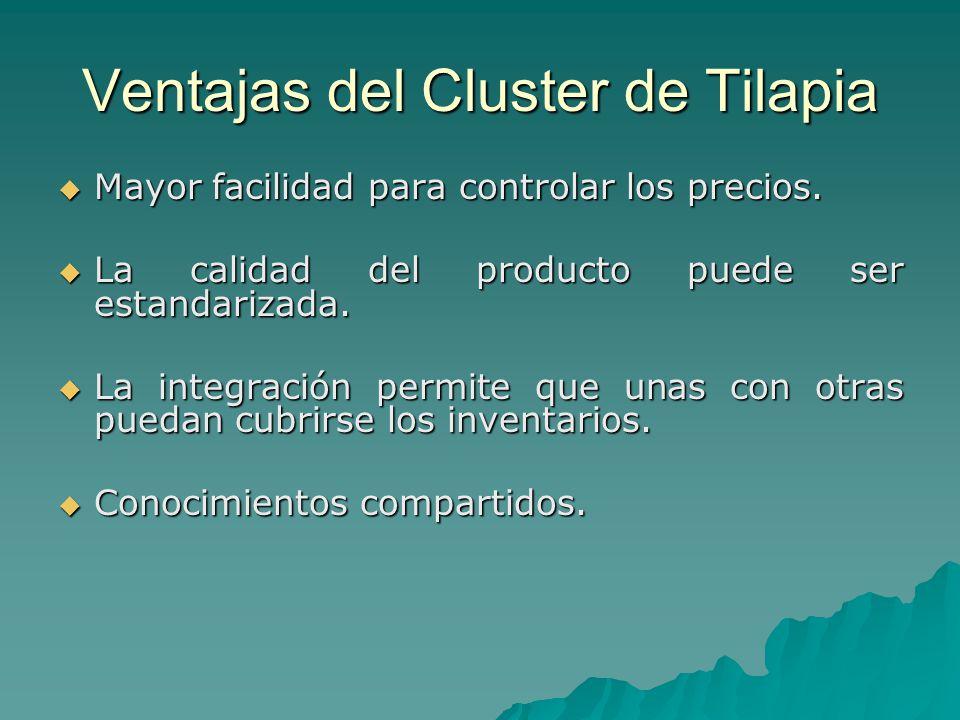 Ventajas del Cluster de Tilapia