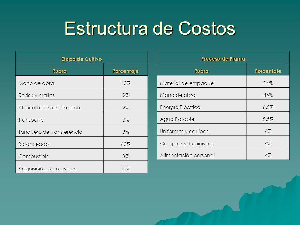Estructura de Costos Etapa de Cultivo Rubro Porcentaje Mano de obra