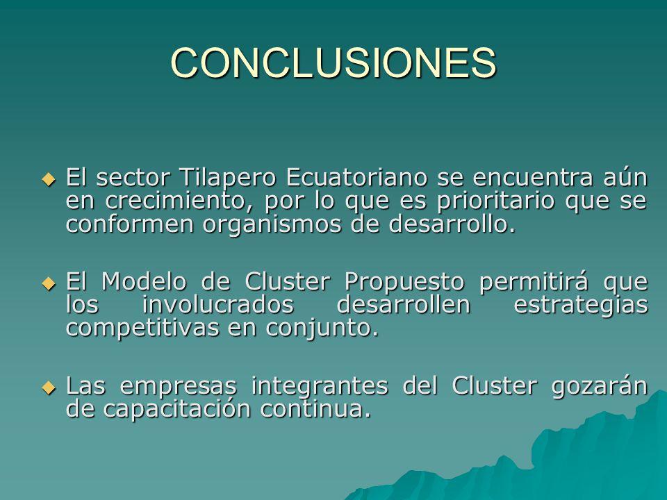 CONCLUSIONES El sector Tilapero Ecuatoriano se encuentra aún en crecimiento, por lo que es prioritario que se conformen organismos de desarrollo.
