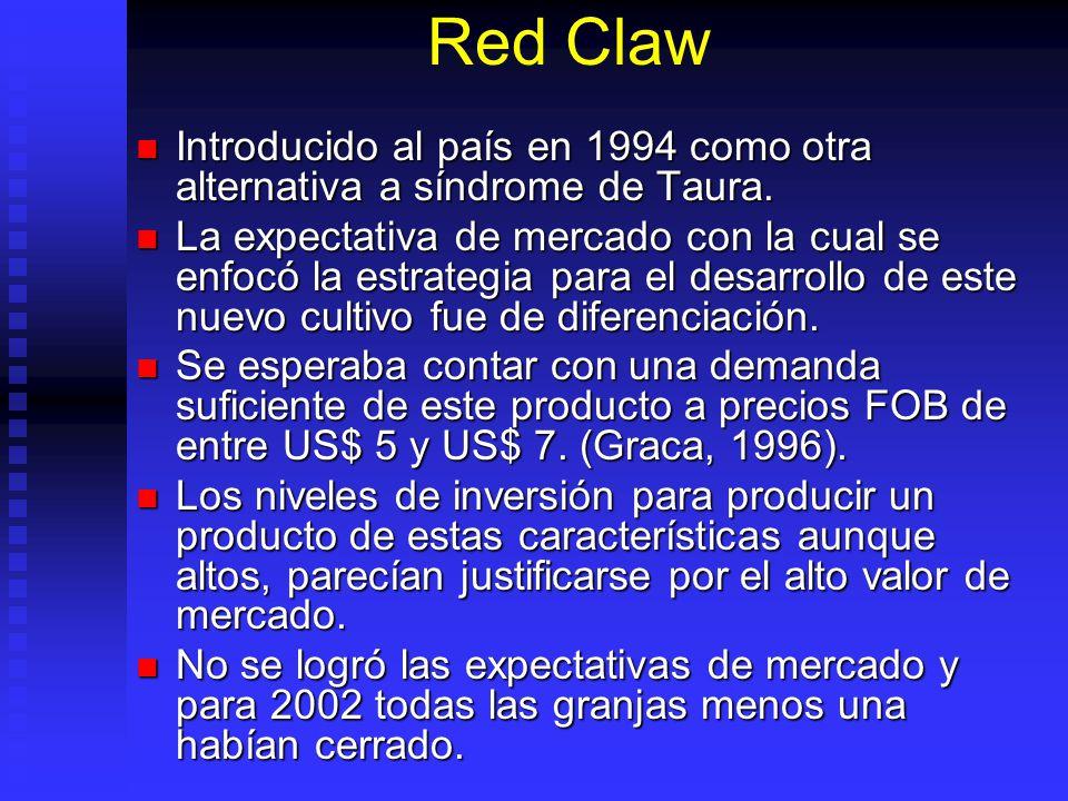 Red Claw Introducido al país en 1994 como otra alternativa a síndrome de Taura.