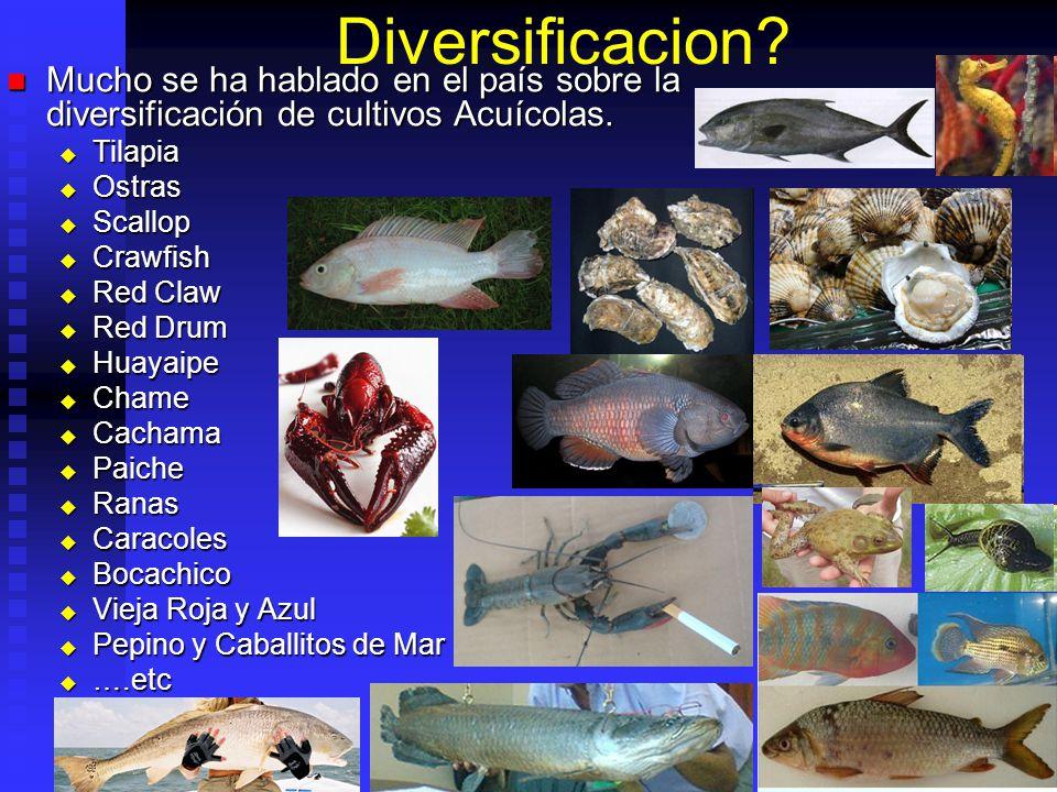 Diversificacion Mucho se ha hablado en el país sobre la diversificación de cultivos Acuícolas. Tilapia.
