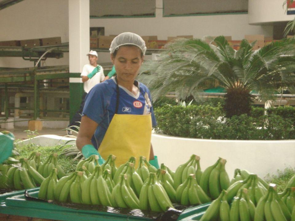 Diseño de un Sistema de Gestión y Control Operacional para una empresa de la Provincia de Manabí que se dedica a la producción de banano