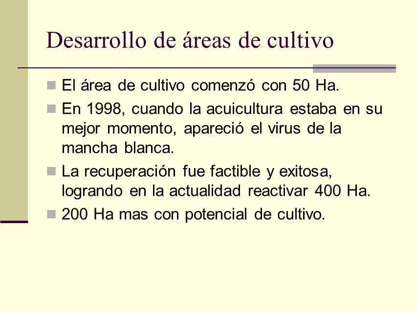 Desarrollo de áreas de cultivo