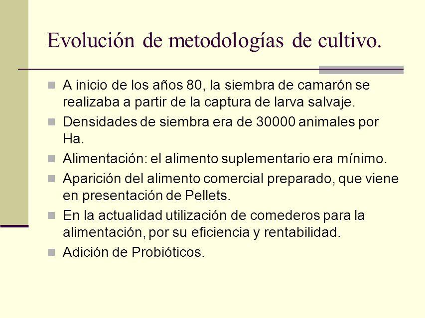 Evolución de metodologías de cultivo.