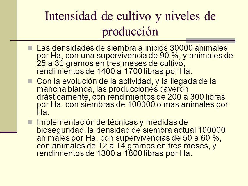 Intensidad de cultivo y niveles de producción