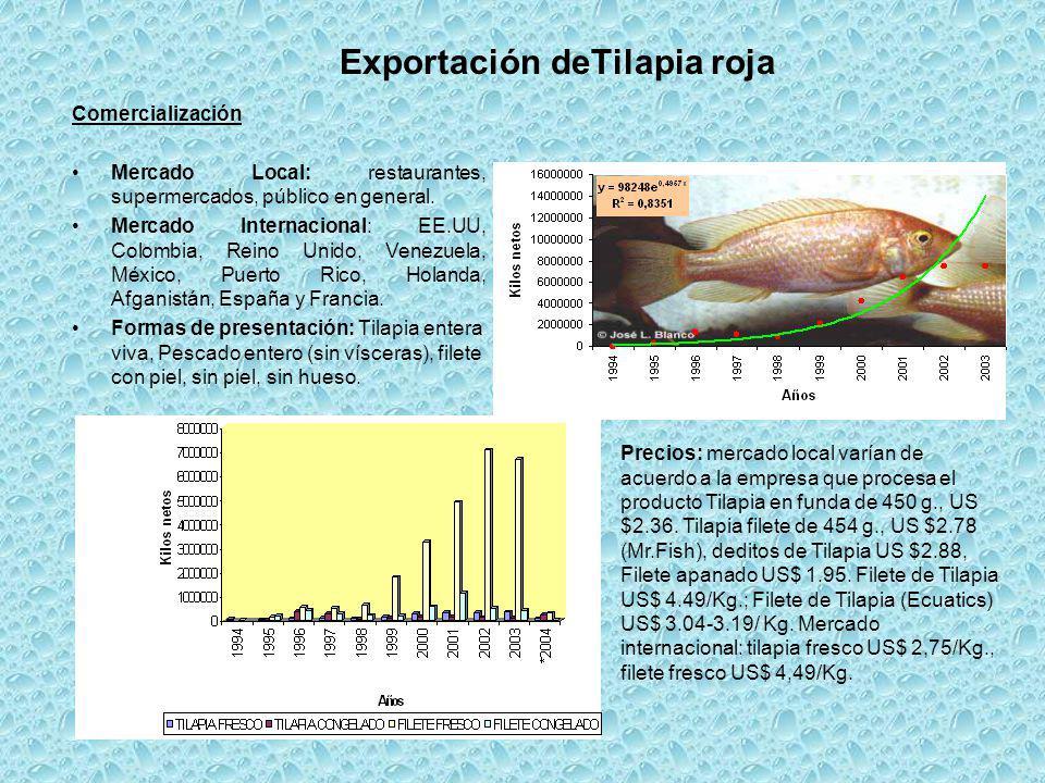 Exportación deTilapia roja