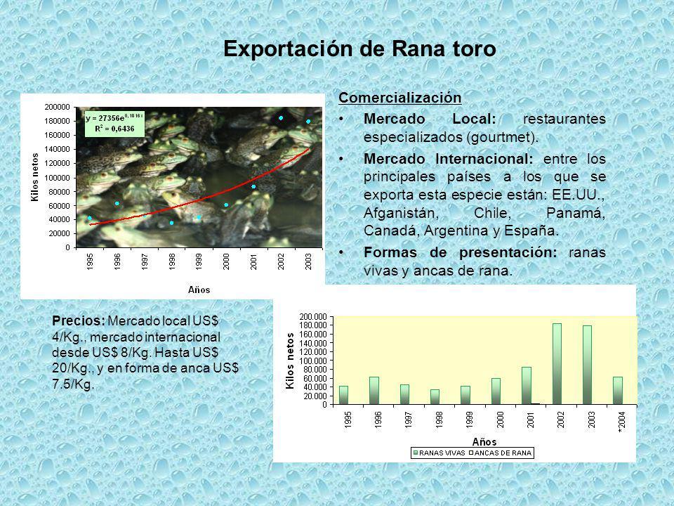 Exportación de Rana toro