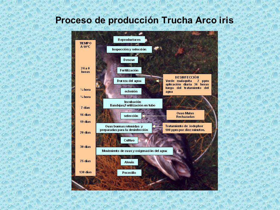Proceso de producción Trucha Arco iris
