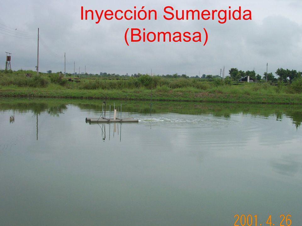 Inyección Sumergida (Biomasa)
