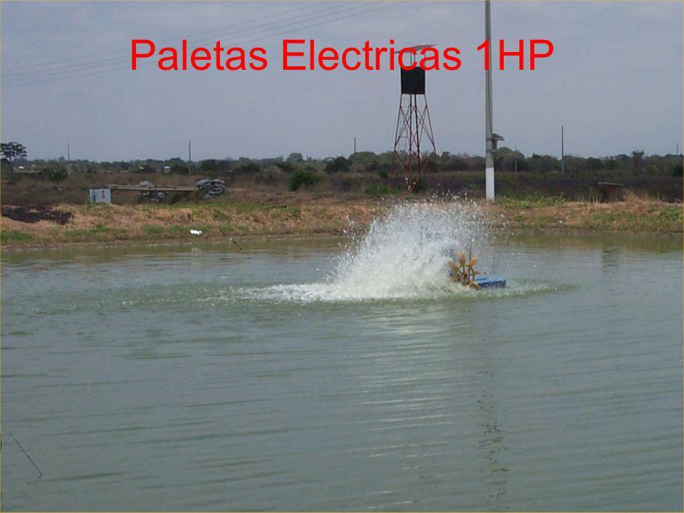 Paletas Electricas 1HP