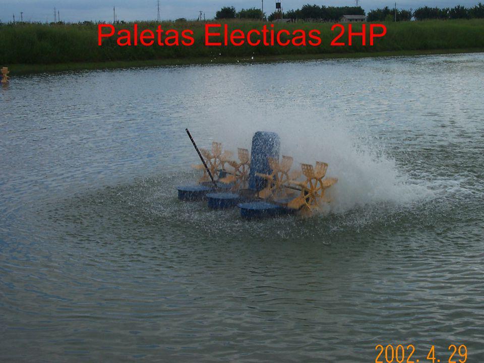 Paletas Electicas 2HP