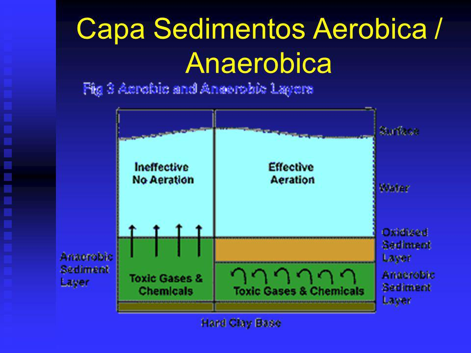 Capa Sedimentos Aerobica / Anaerobica