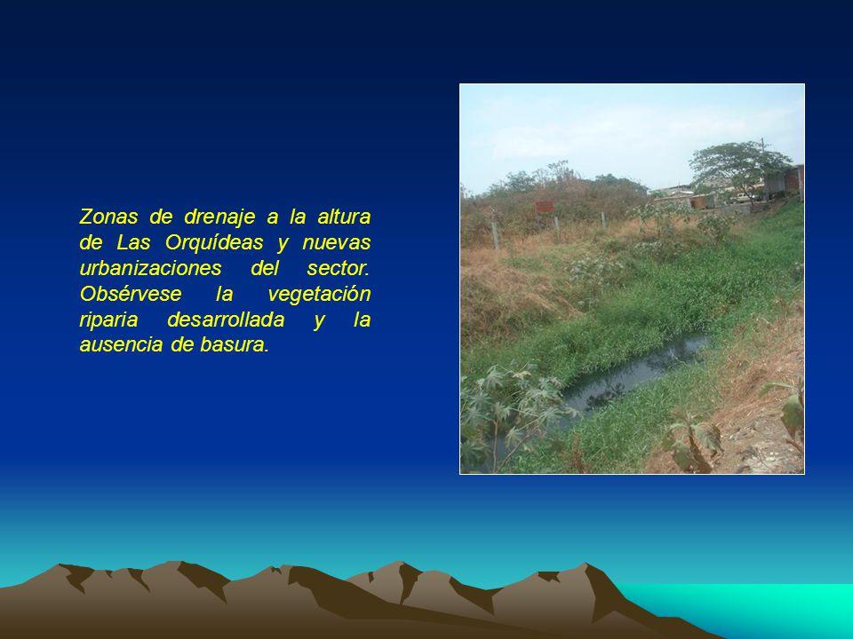 Zonas de drenaje a la altura de Las Orquídeas y nuevas urbanizaciones del sector.