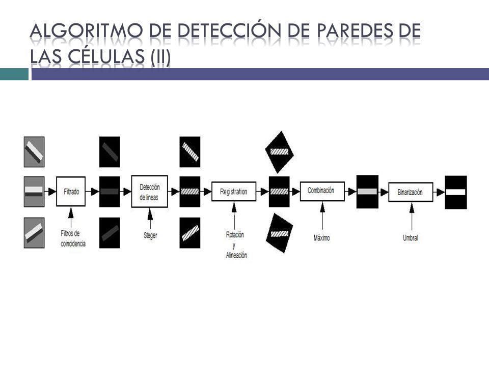Algoritmo de Detección de paredes de las células (II)