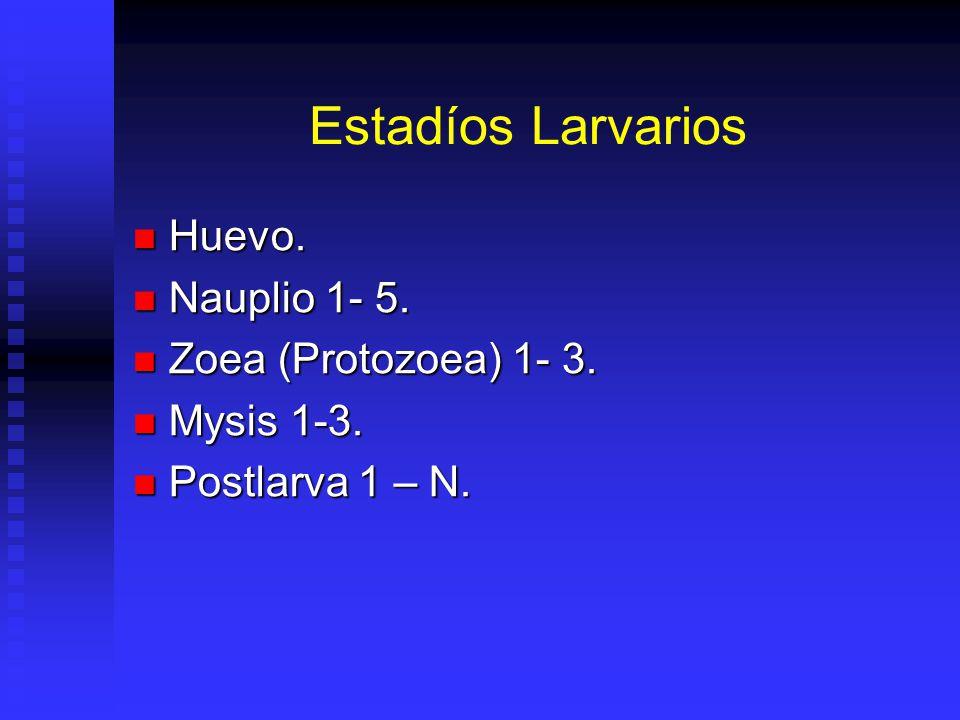 Estadíos Larvarios Huevo. Nauplio 1- 5. Zoea (Protozoea) 1- 3.