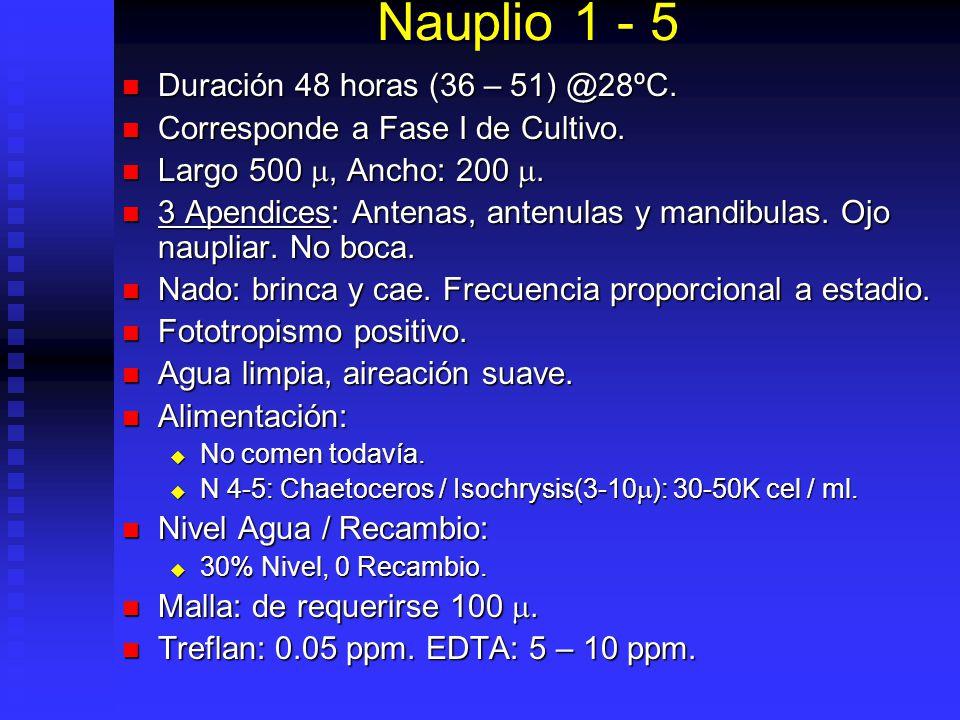 Nauplio 1 - 5 Duración 48 horas (36 – 51) @28ºC.