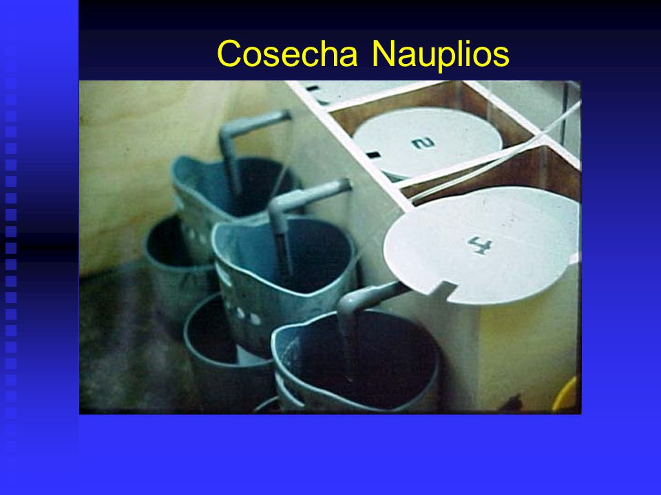 Cosecha Nauplios