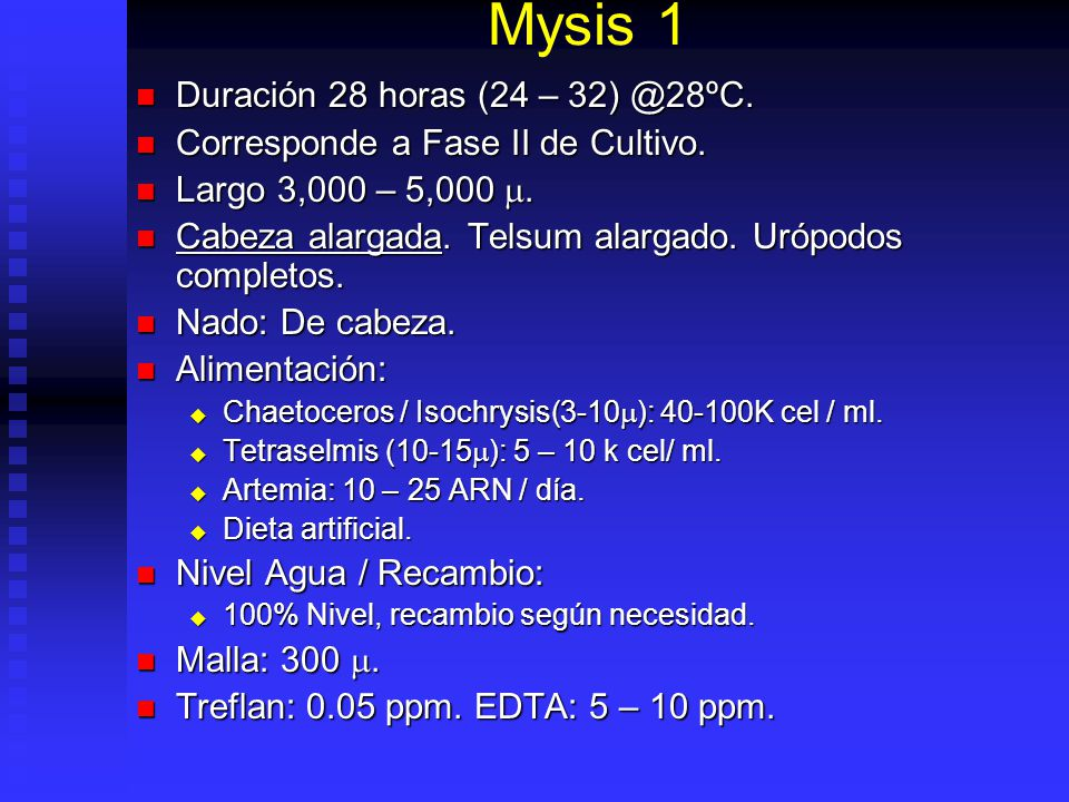 Mysis 1 Duración 28 horas (24 – 32) @28ºC.