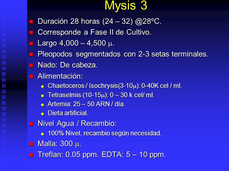 Mysis 3 Duración 28 horas (24 – 32) @28ºC.