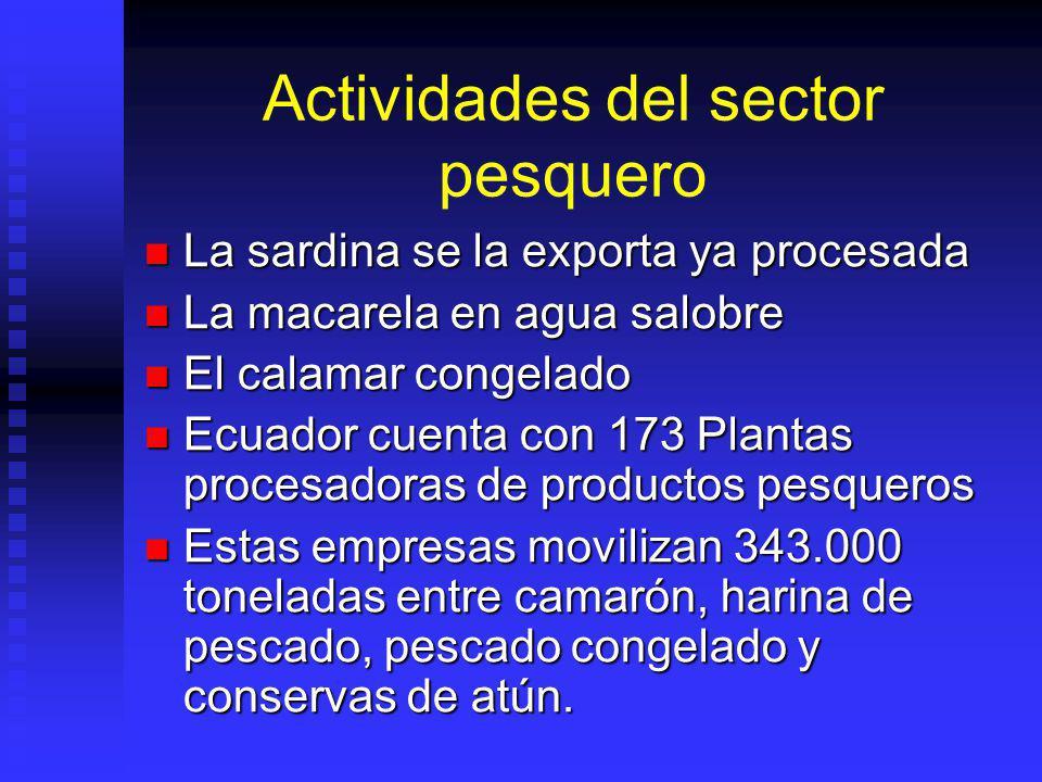 Actividades del sector pesquero
