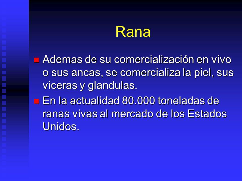 Rana Ademas de su comercialización en vivo o sus ancas, se comercializa la piel, sus viceras y glandulas.
