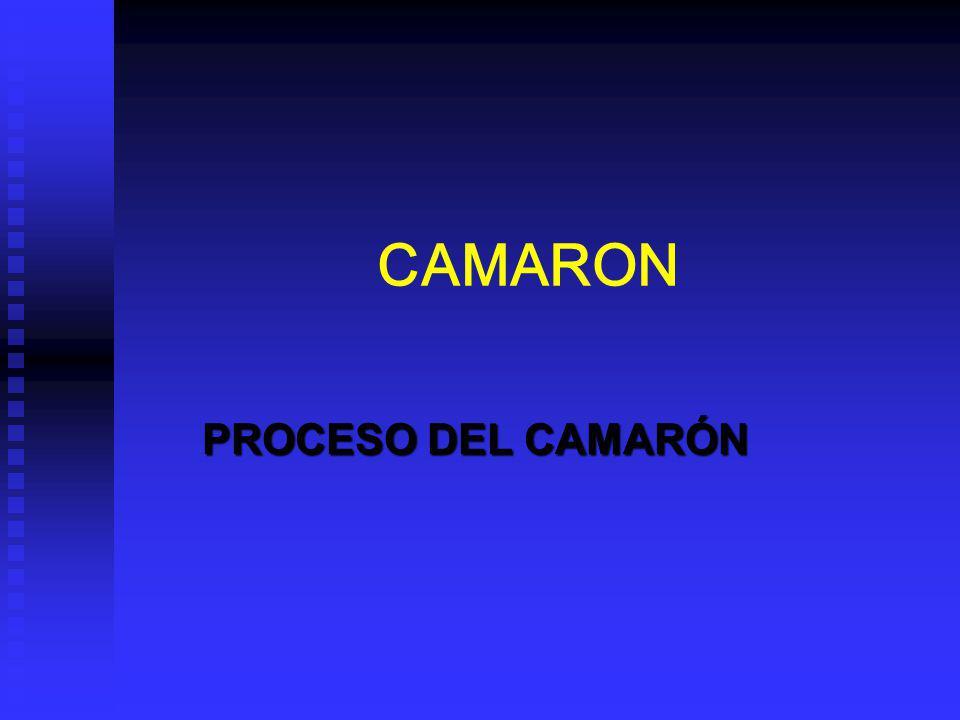 CAMARON PROCESO DEL CAMARÓN
