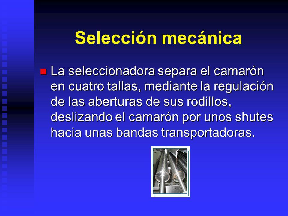 Selección mecánica