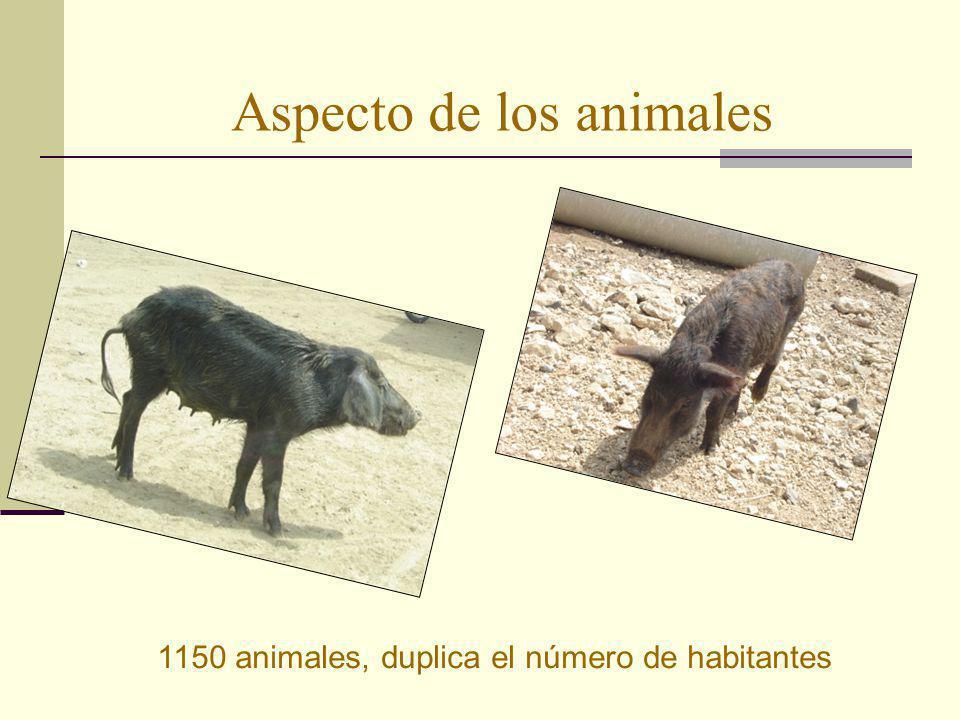 Aspecto de los animales