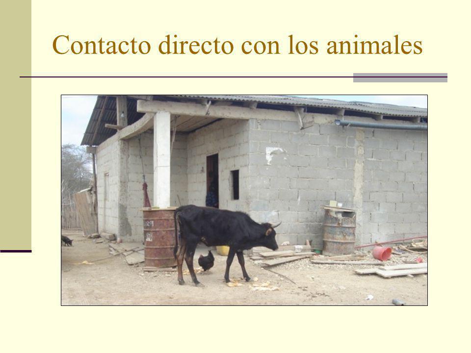 Contacto directo con los animales