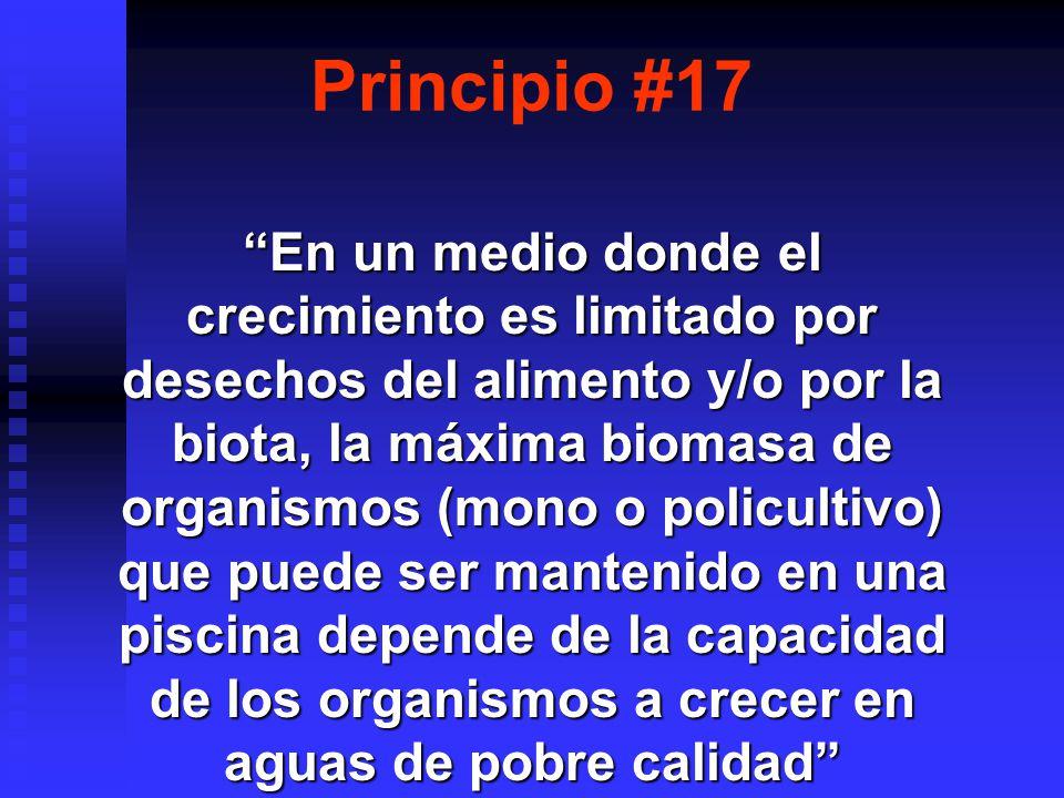 Principio #17