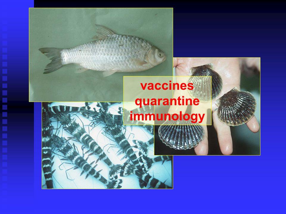 vaccines quarantine immunology