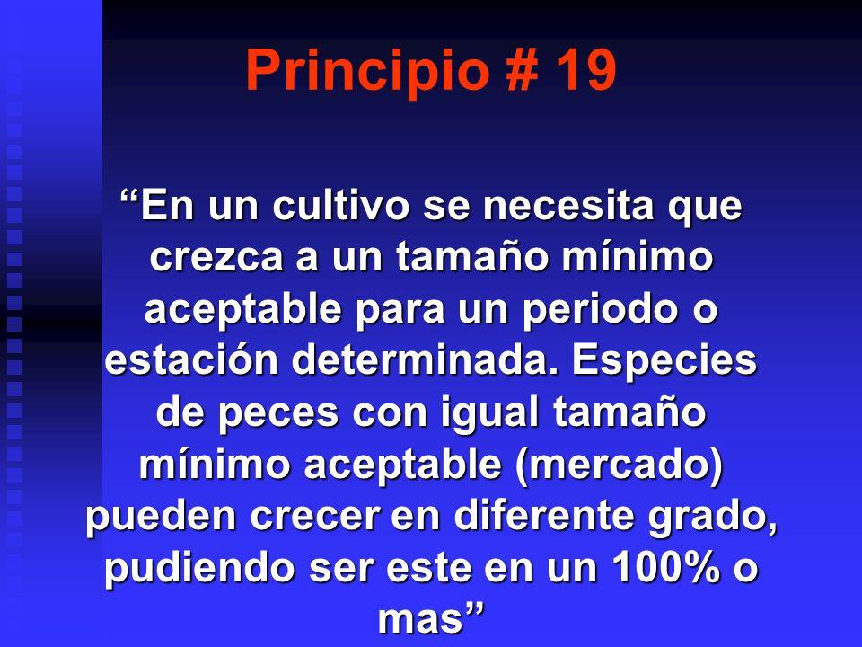 Principio # 19