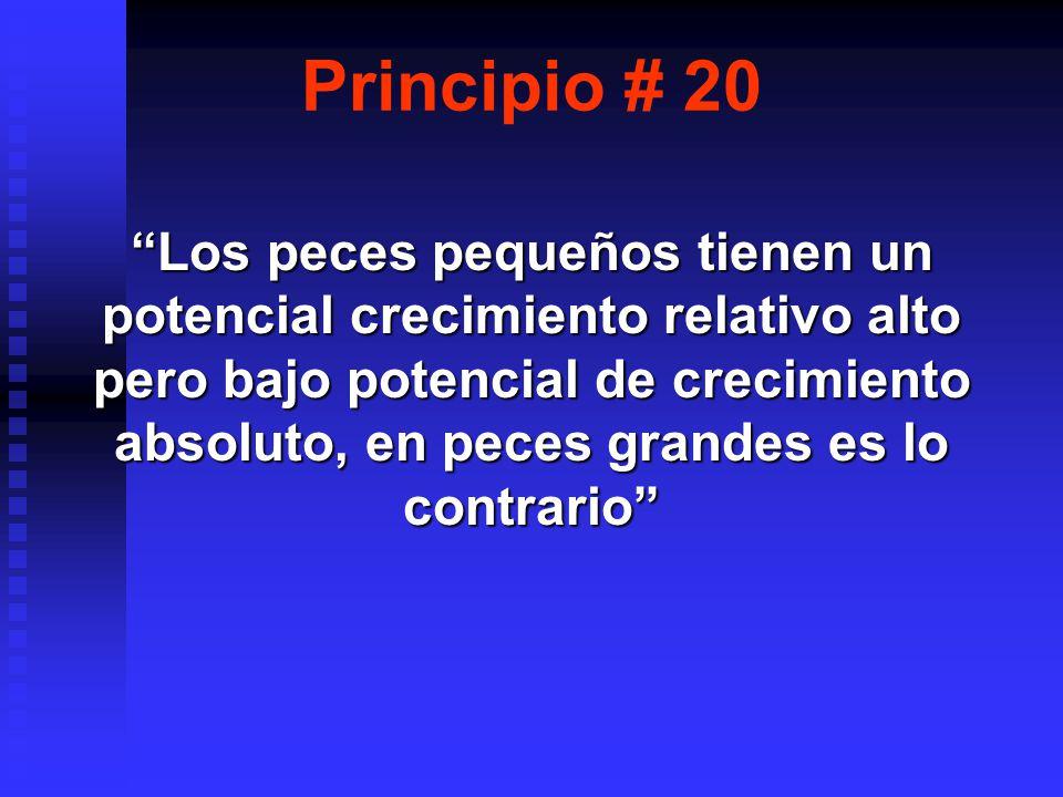 Principio # 20
