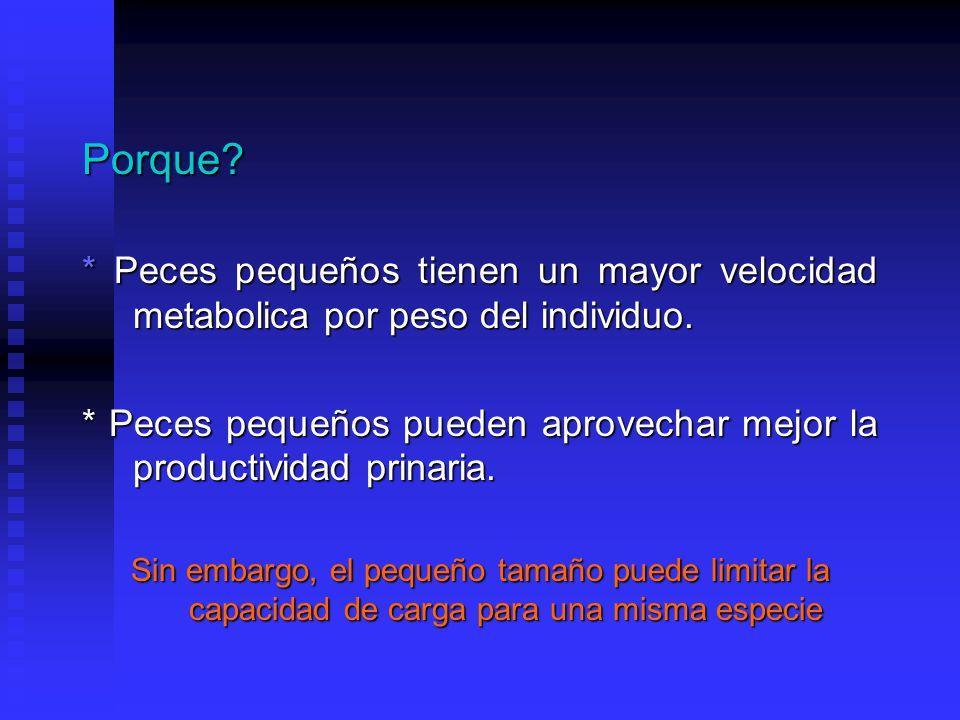 Porque * Peces pequeños tienen un mayor velocidad metabolica por peso del individuo.
