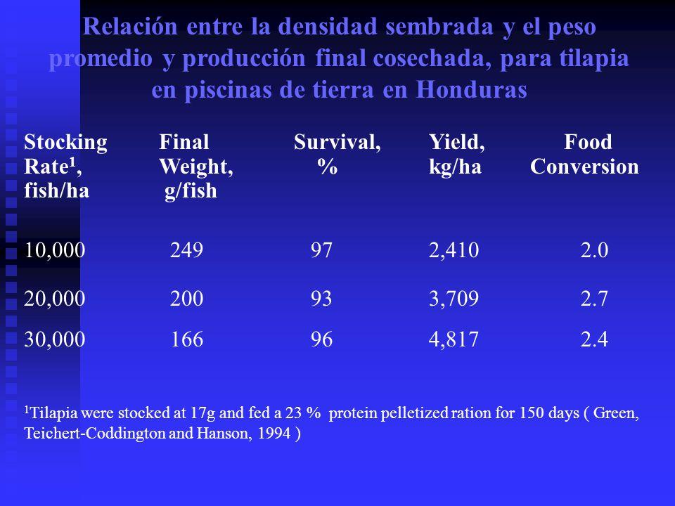 Relación entre la densidad sembrada y el peso promedio y producción final cosechada, para tilapia en piscinas de tierra en Honduras