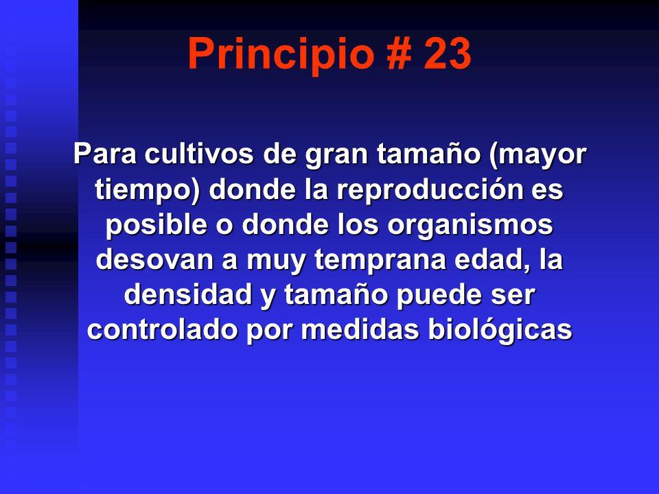 Principio # 23