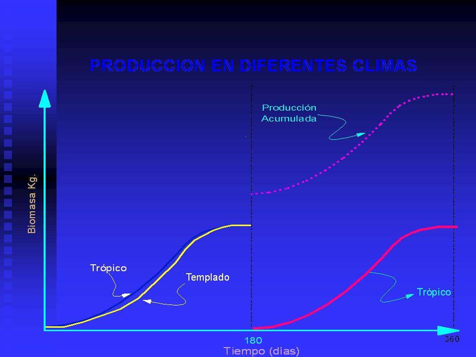 En climas tropicales, se puede producir mas, puesto que se tienen dos o mas producciones al año, a diferencia que lo que ocurre en climas templados, donde en ciertas épocas del año no se puede producir o el crecimiento se desacelera drasticamente.