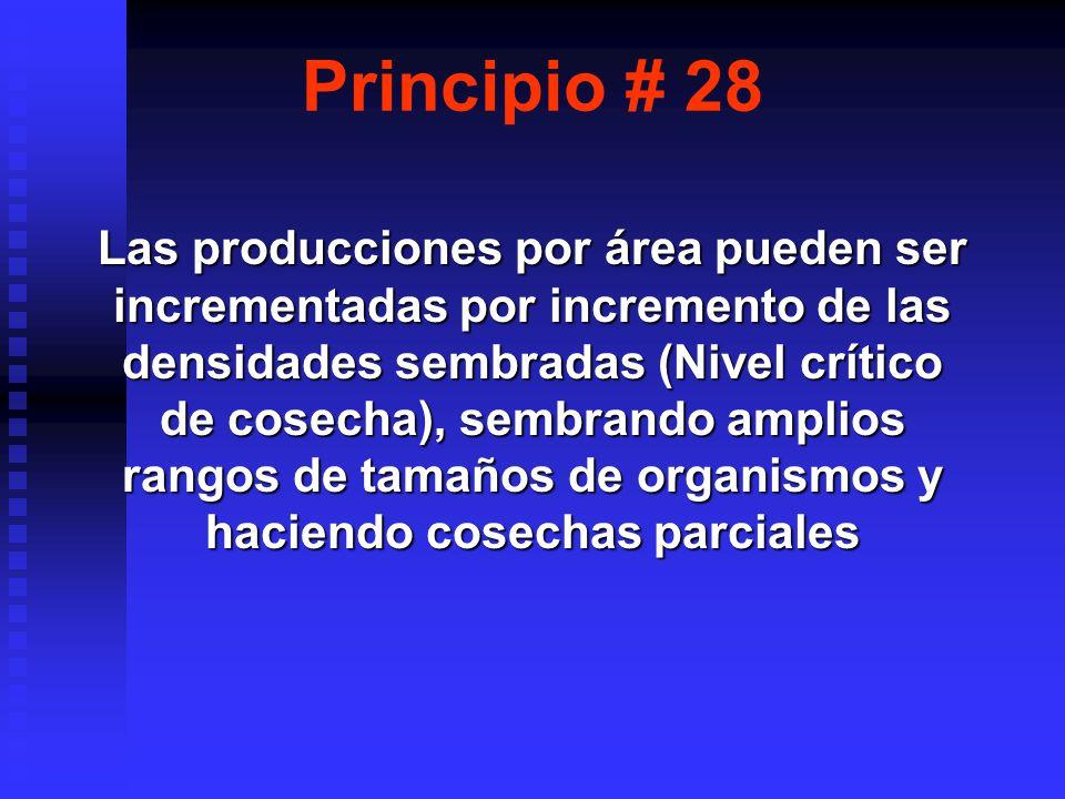 Principio # 28