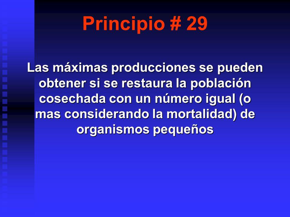 Principio # 29