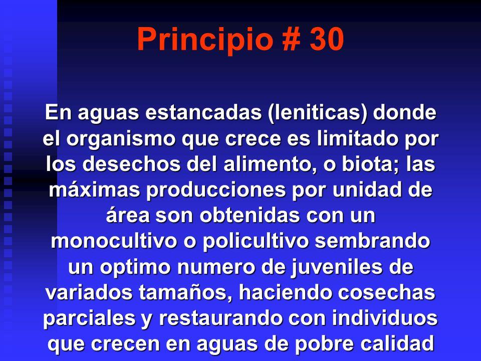 Principio # 30