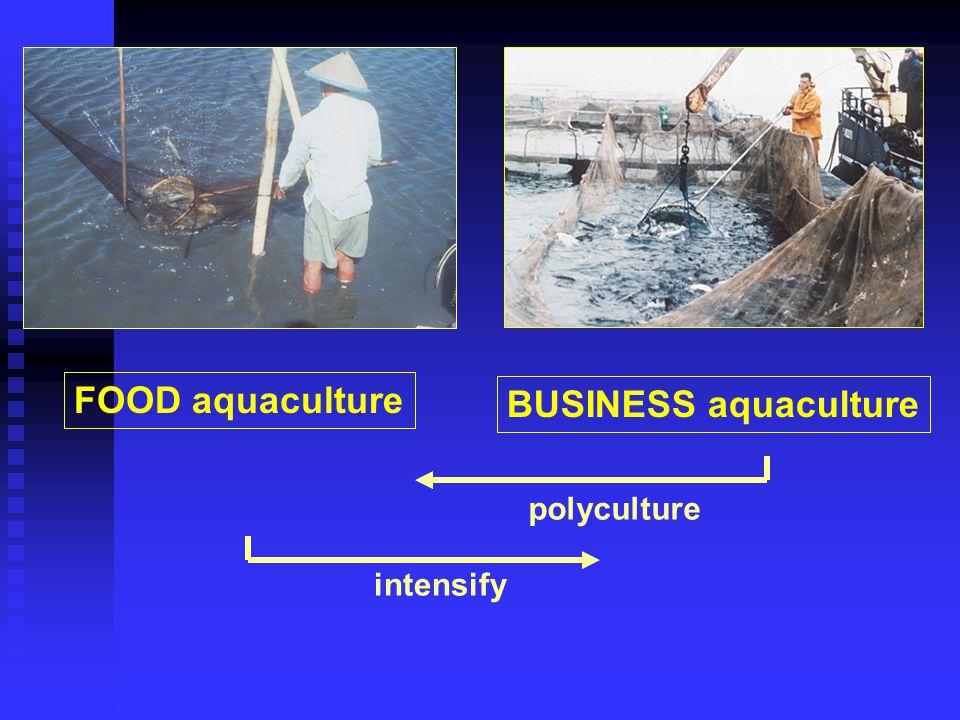 FOOD aquaculture BUSINESS aquaculture polyculture intensify