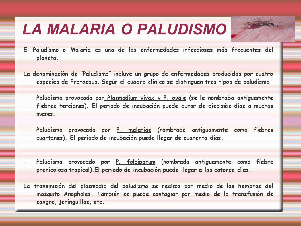 LA MALARIA O PALUDISMO El Paludismo o Malaria es una de las enfermedades infecciosas más frecuentes del planeta.