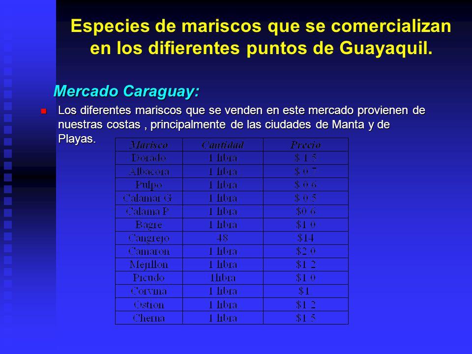 Especies de mariscos que se comercializan en los difierentes puntos de Guayaquil.