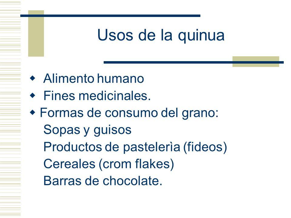 Usos de la quinua Alimento humano Fines medicinales.