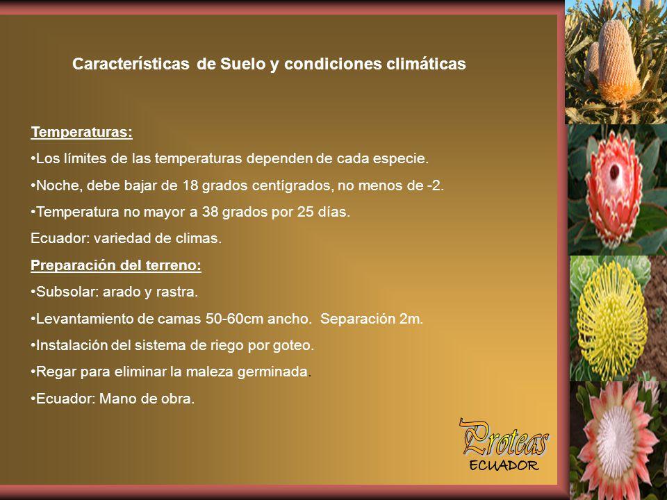 Proteas Características de Suelo y condiciones climáticas